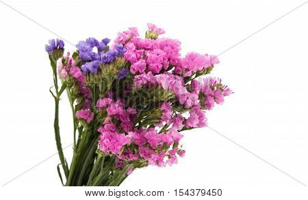 statice summer flower bouquet on white background
