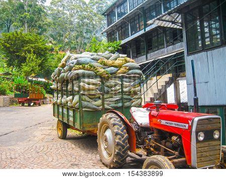 Nuvara Eliya Sri Lanla - May 03 2009: The bags with tea leaf crop on Mackwoods Limited PVT tea factory for weighing in Nuwara Eliya Sri Lanka.
