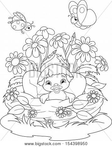 Illustration duckling hatched in the nest, Coloring Page