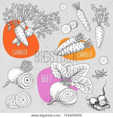 Set of stickers in sketch style, food and spices, old paper textured background. Vegetable set beet with leaves, sliced beets, carrots with leaves, sliced carrots. Hand drawn vector illustration.