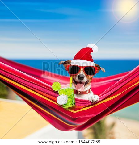 Dog On Hammock On Summer Christmas Holidays