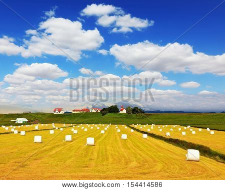 Rural pastoral after harvesting. Big field from the remains of a yellow grass and haystacks. The farm and different economic constructions is in the distance visible
