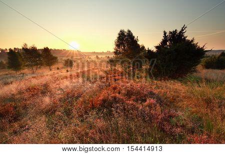 beautiful gold summer sunrise over the heathland
