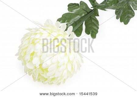 Beautiful Flower Dahlia, Isolated On The White Background
