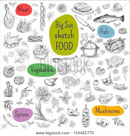 Big set of sketch drawn. Food, white background. Meat, fish, vegetables, mushrooms, spices. Hand drawn vector illustration.