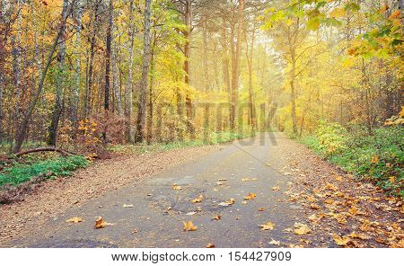 Country road in autumn forest covert. Finland. Nature trees in autunm forest.