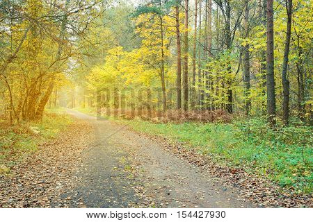 Pathway through the beautiful autumn forest. Autumn forest covert. Tinted photo.