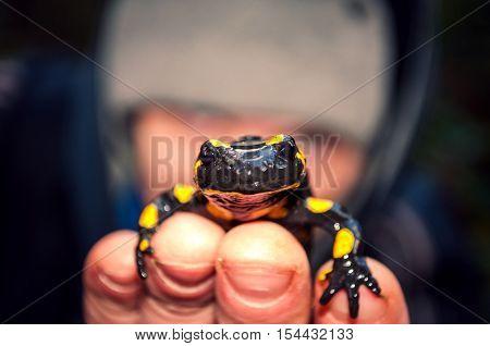 Fire Salamander Closeup On The Hand