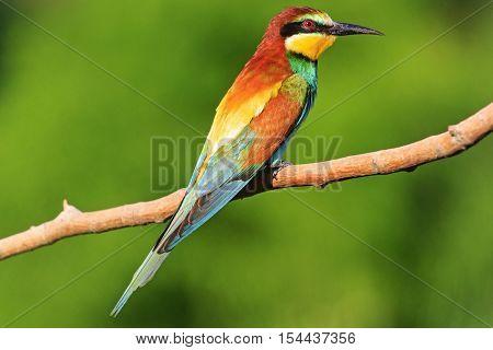 bright colored bird sitting on a branch on a green background, rare bird, bird watching