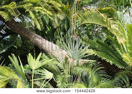 A Beautiful Display of Tropical Plants and Trees.