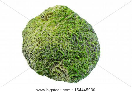 Moss and lichen covered the corals in coastal limestone. Sponge coral gemstone isolated on white background with clipping path.