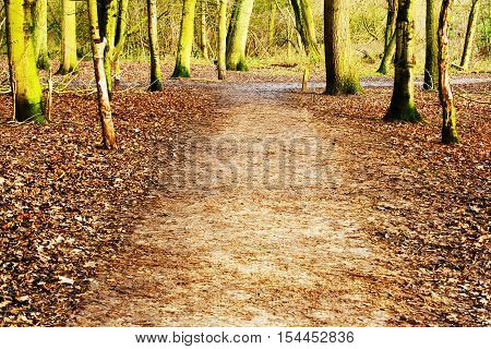 Footpath through the woods on an Autumn day in Warwickshire United Kingdom with an area of copyspace