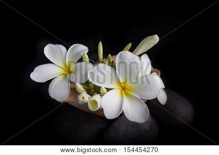 White Flower Plumeria Or Frangipani Bunch In Sea Conch Shell