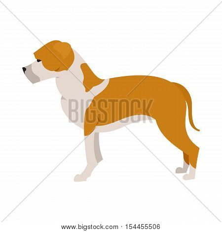American staffordshire terrier in flat style, animal pet purebred, vector illustration