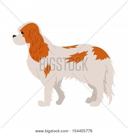 Cavalier king charles spaniel hound or dog and purebred animal, vector illustration