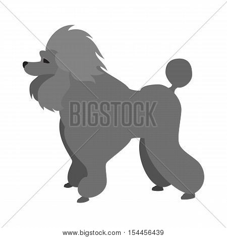Poodle dog flat and pet animal breed, friend doggy domestic, vector illustration
