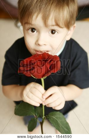 The Sight Of The Boy Which Holds A Flower In A Hand