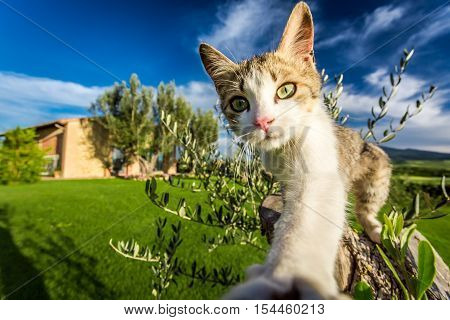Curious cat in the countryside Tuscany in summer