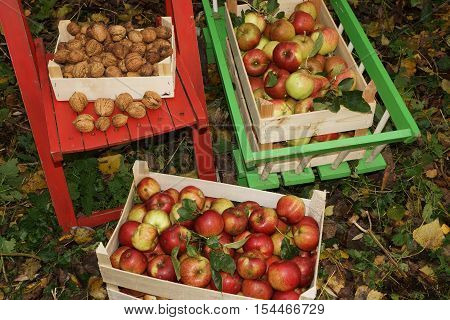 Fresh organic apples and walnuts in wooden boxes