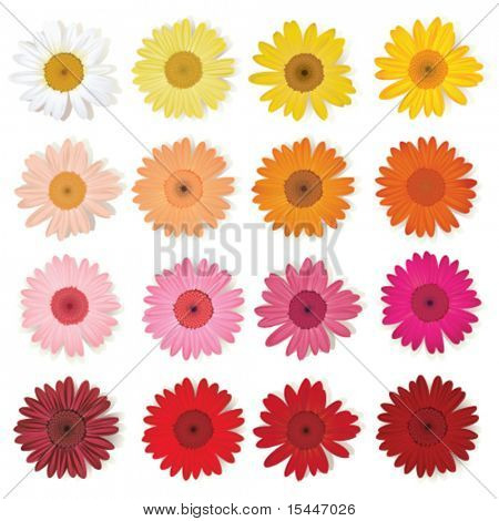 Daisy collection