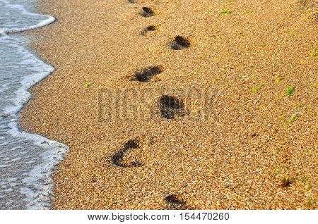 Footprints In The Sand Of The Sea. Footprints Of Bare Feet On The Beach.