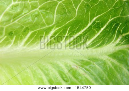 Close Up Of Romaine Lettuce