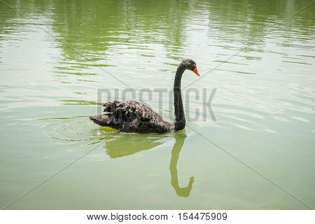 Goose With Orange Beak Enjoying The Cold Water