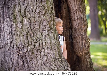 Portrait of a cute kid boy in the tree cavity on a sunny day. Curious child looking out of a tree hollow while hiding in the park. Playing and exploring boy outdoors.