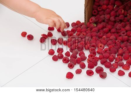 Hand of a little toddler child taking fresh organic raspberries from carton box. Boy picking berries. Summer dessert and snacks cattered on white background. Healthy food and summer concept