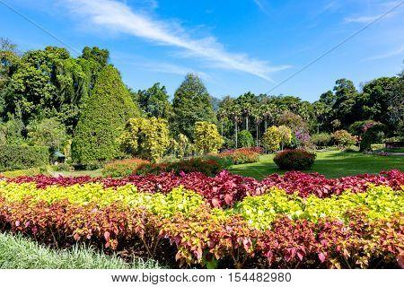 Nice sunny day in city park, SriLanka