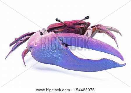 Fiddler Crab Isolated