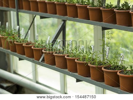 Plants in pots. Interior of greenhouse for growing flowers and plants. Market for sale plants