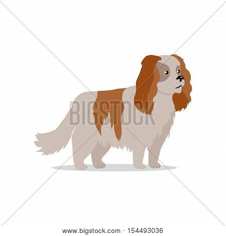 Cocker spaniel dog breed flat design vector. Purebred pet. Domestic friend and companion animal illustration. For pet shop ad, animalistic hobby concept, breeding illustration. Cute canine portrait.