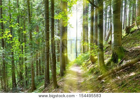 Path Through Green Trees In Forest