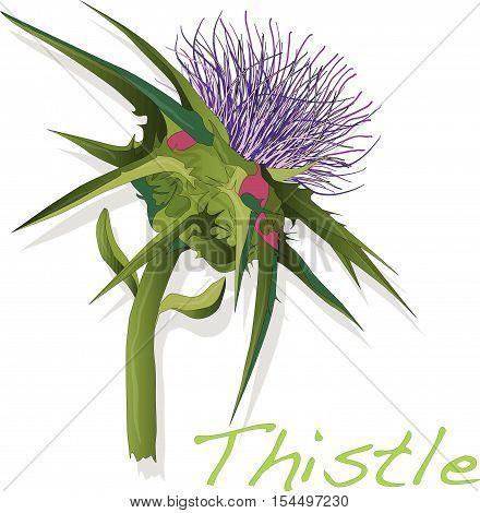 Thistle5.eps
