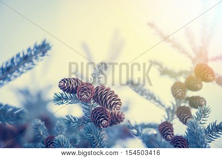 Christmas background with snow covered frozen fir tree with cones in blue tint colors and copy space