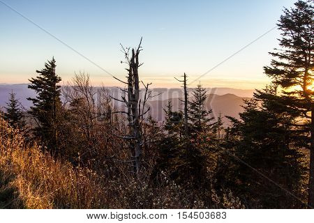 Death Of A Forest. Smoky Mountain sunset horizon with barren hemlock trees in the foreground. The Hemlocks in the boreal forests are being decimated by the wooly adelgid in the national park.