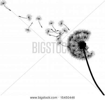 Dandelion seed parachutes silhouette