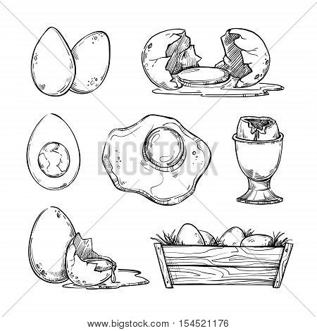 Hand Drawn Vector Illustration - Set Of Eggs. Scrambled Egg, Omelet, Farm Egg Etc