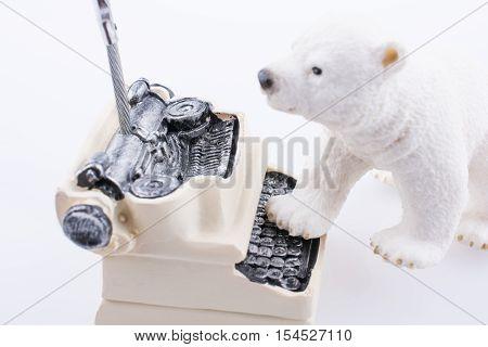 Polar Bear Cub In On The Typewriter