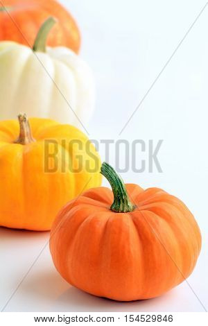 Colorful miniature pumpkins in vertical format on white background with room for text. Macro with shallow DOF and shot in natural light