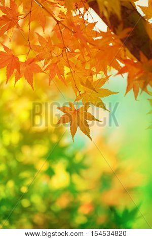 Beautiful transitions of colors of autumn. Colorful spectrum of bright autumn colors, Red, orange, yellow, green leaves on a autumn trees. Shallow depth of field.