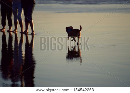 Small dog running on the beach in the tide to the group of three waiting people