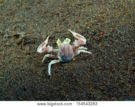 The surprising underwater world of the Bali basin, Island Bali, Puri Jati, cleaner crab