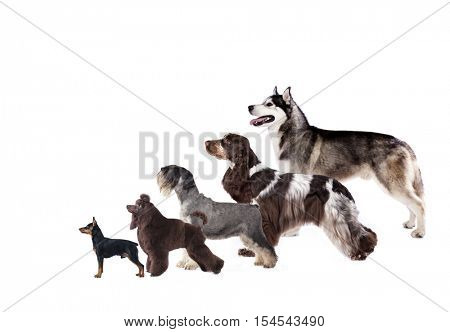 Group of dogs at the exhibition stand, dog profile