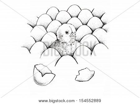Chick peeking out of eggs sketch illustration for print, infographics or other your designe. Hand drawn chick picture. Eggs pattern image. Isolated on white background. Vintage engraving style.