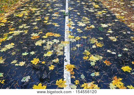 Autumn path in perspective. Rainy asphalt road with marking with yellow maple and green leaves and pine needles.