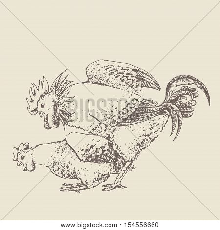 Hard mating of a rooster and hen. Vintage design handmade illustration with two person. Hand drawn brood-hen and cock on beige background. Illustration of vector for your design.