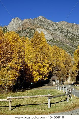 Golden Trees With Mountains In Background