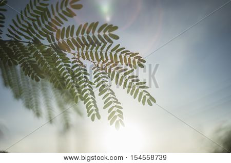 Portrait Of Green Leave In Sunset Moment With Sun In Background.delective Focus.sun Flare Effect Fro